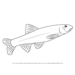 How to Draw a Dace