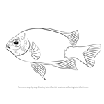 How to Draw a Damselfish
