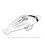 How to Draw a Dottyback