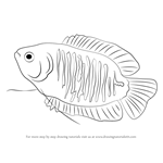 How to Draw a Dwarf Gourami