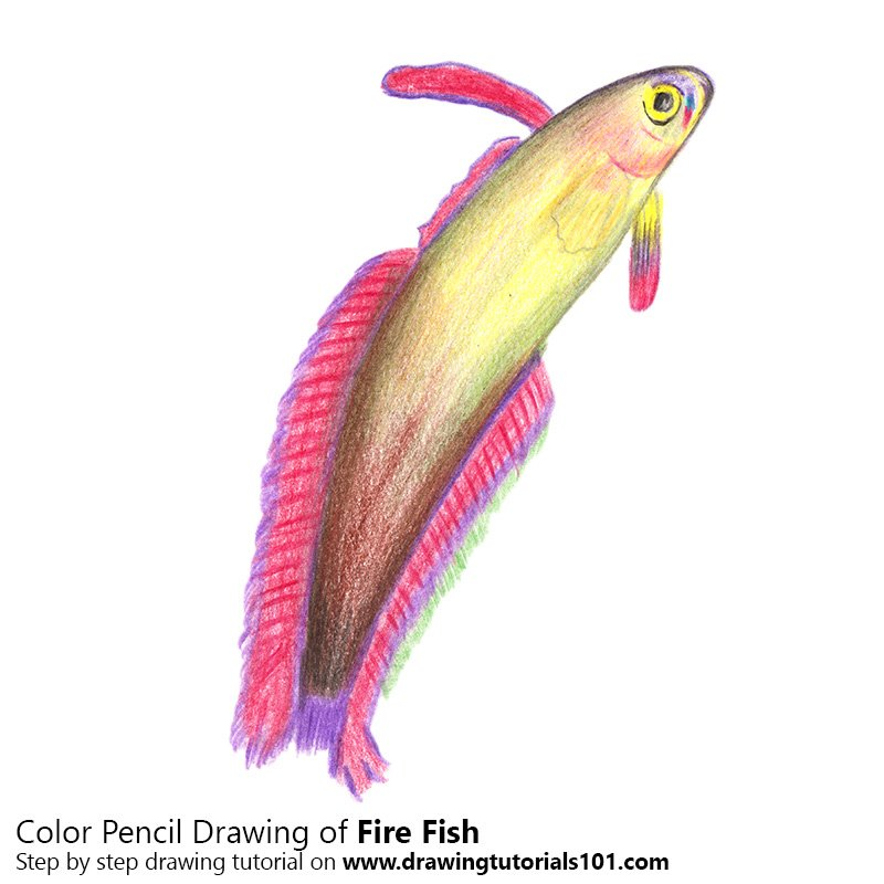 Fire Fish Color Pencil Drawing
