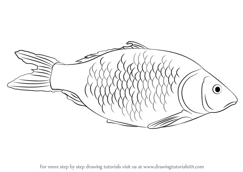 Learn how to draw a fish fishes step by step drawing for Drawings of fish