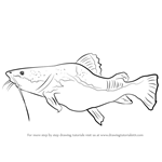 How to Draw a Giant Catfish