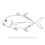 How to Draw a Giant Trevally