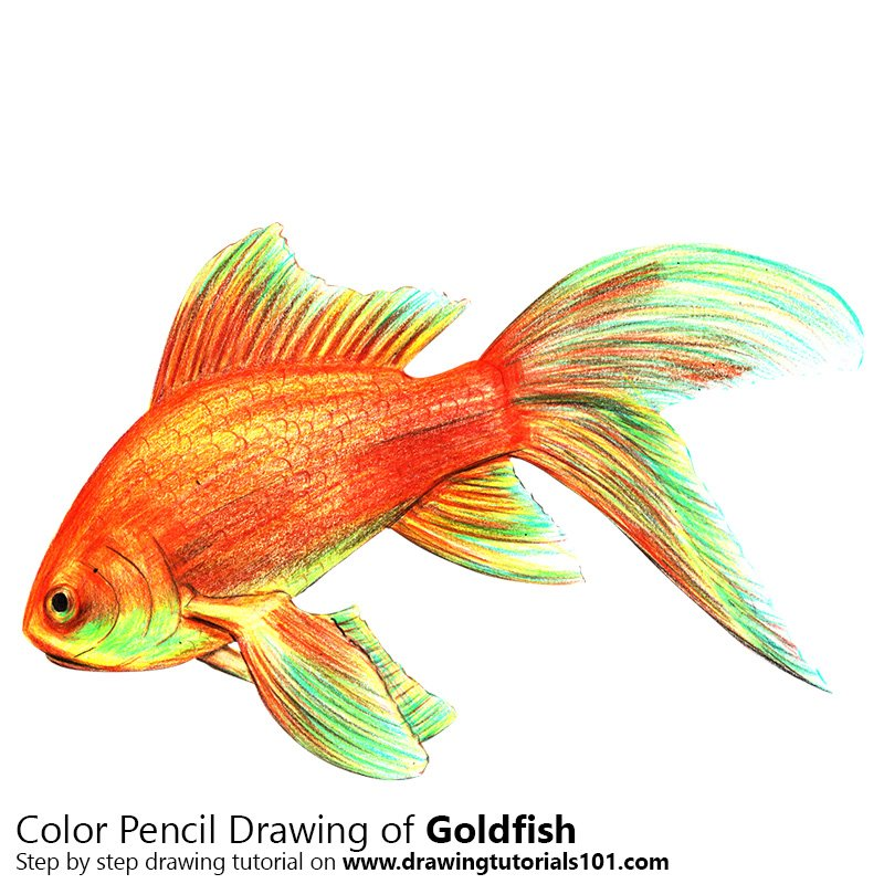Goldfish Pictures Drawings Kids Drawing