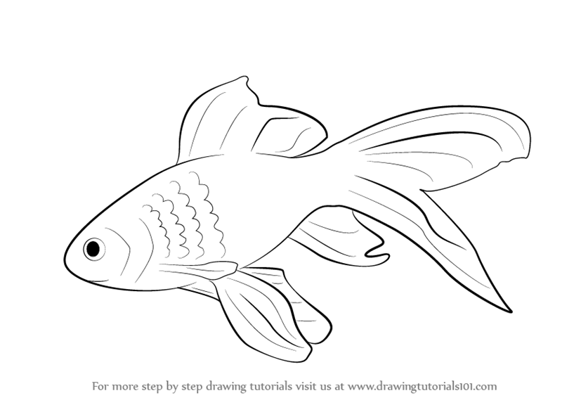 learn how to draw a gold fish fishes step by step drawing tutorials