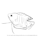 How to Draw a Gourami