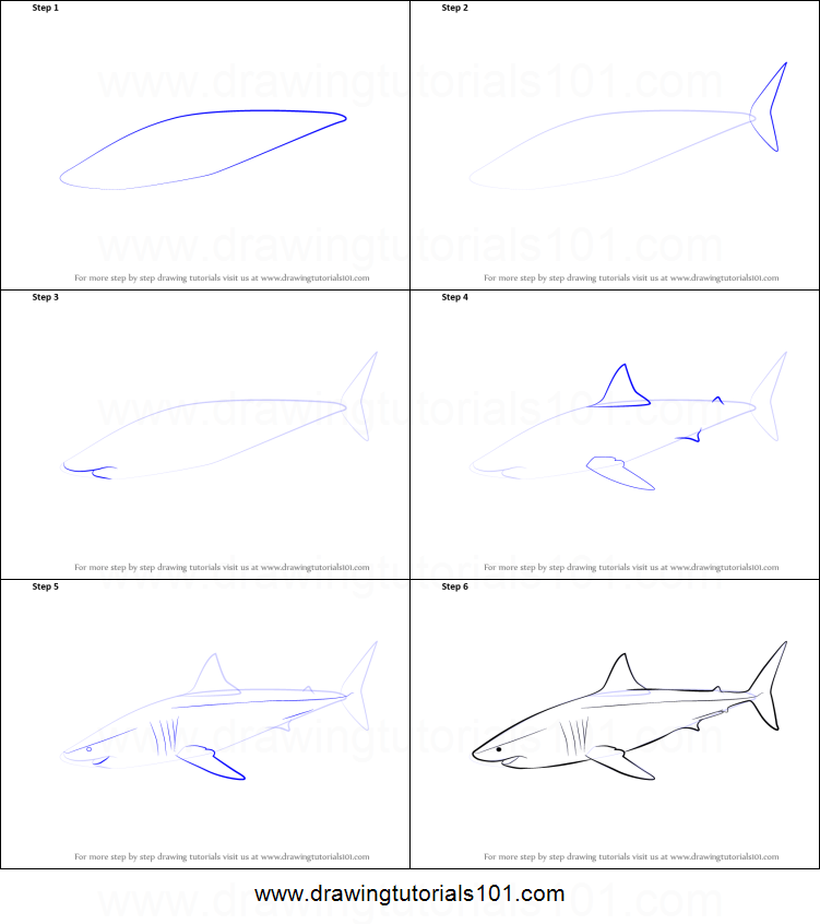 How to Draw a Great White Shark printable step by step ...