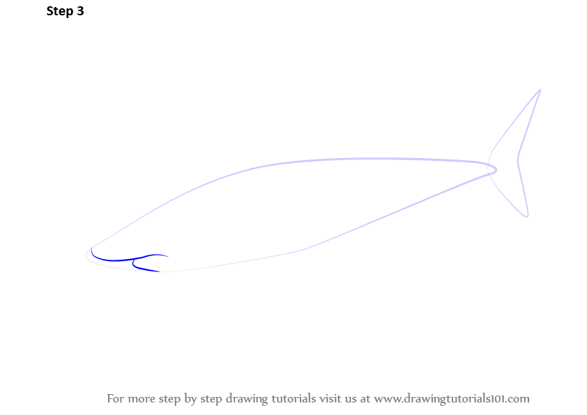 Learn How to Draw a Great White Shark (Fishes) Step by ...