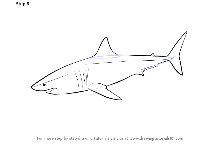 Learn How To Draw A Great White Shark Fishes Step By Step