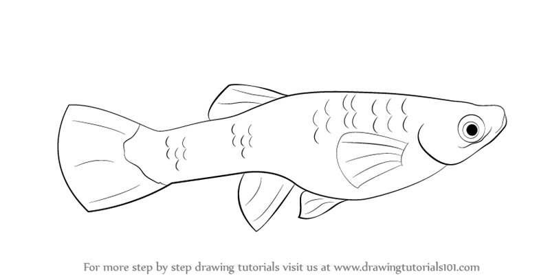 Step By Step How To Draw A Guppy Drawingtutorials101 Com Children Guppies Coloring Pages