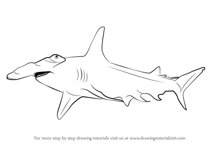 Line Drawing Shark : Hammerhead shark line drawing