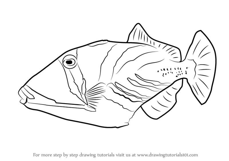 how to draw Lagoon Triggerfish step 0