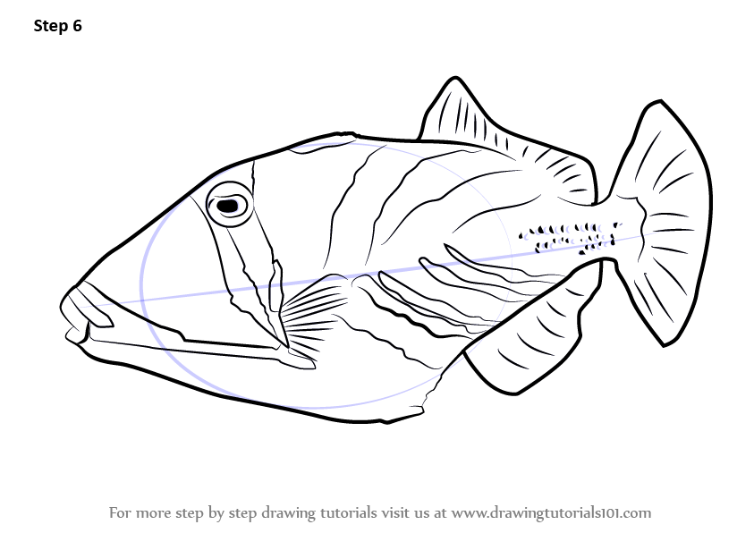 trigger fish coloring pages - photo#12
