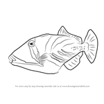How to Draw a Lagoon Triggerfish