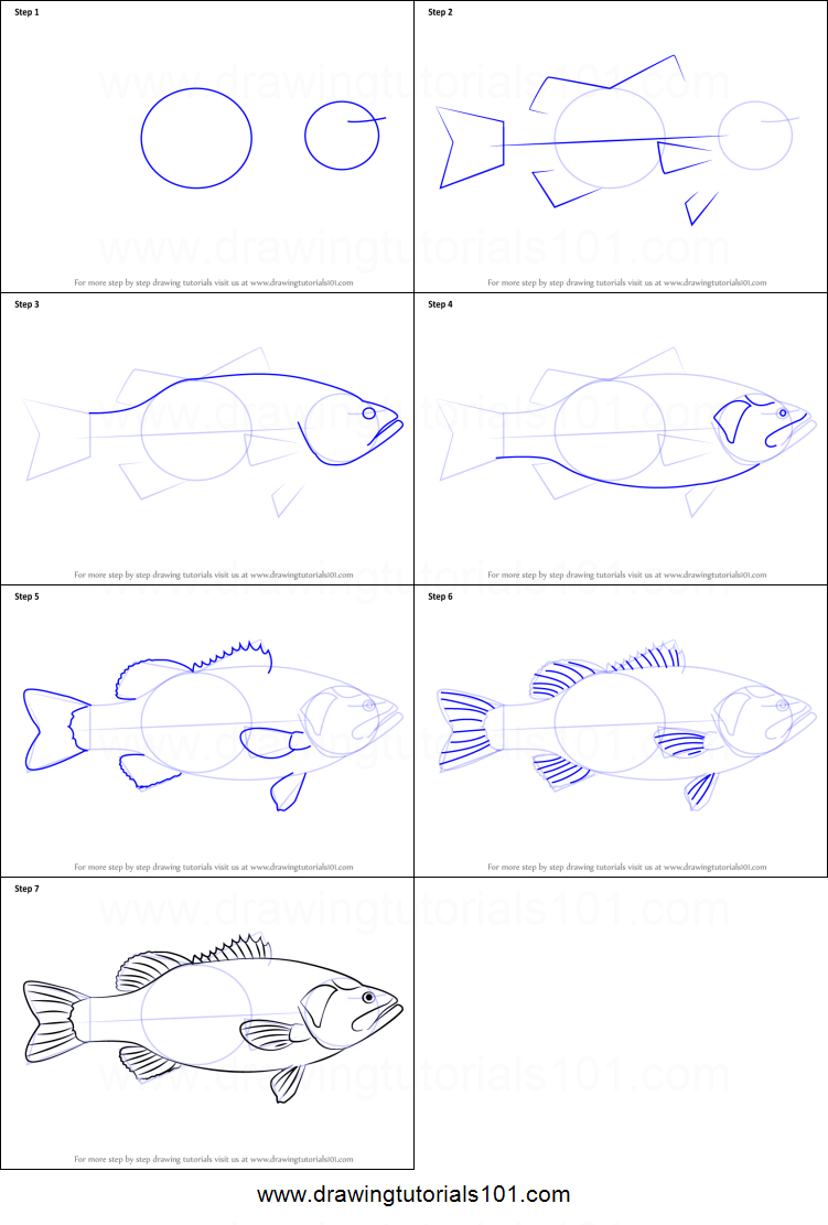 How To Draw A Largemouth Bass Printable Step By Drawing Sheet DrawingTutorials101
