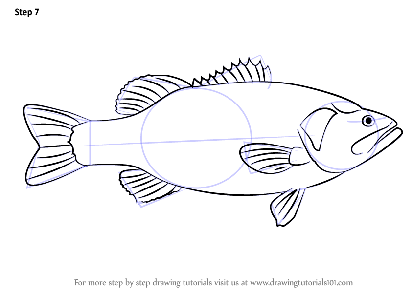 learn how to draw a largemouth bass fishes step by step