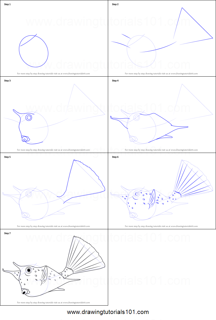how to draw a longhorn cowfish