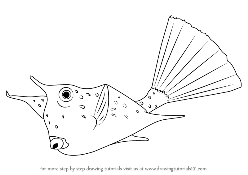 learn how to draw a longhorn cowfish fishes step by step drawing tutorials