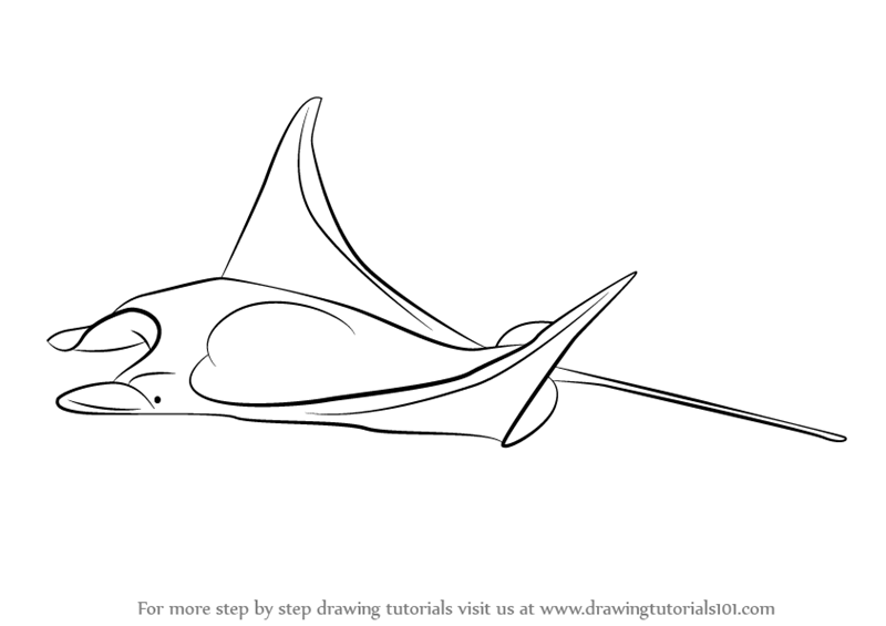 Tiburon 0 moreover Fish Pattern moreover White Leghorn Chickens Free Vintage Clip Art likewise Illustration Stock Livre De Coloriage De Tortue Pour Le Vecteur D Adultes Image67521097 further Cute Farm Animal Coloring Pages Toddler Will Love 0084919. on sea animals coloring pages