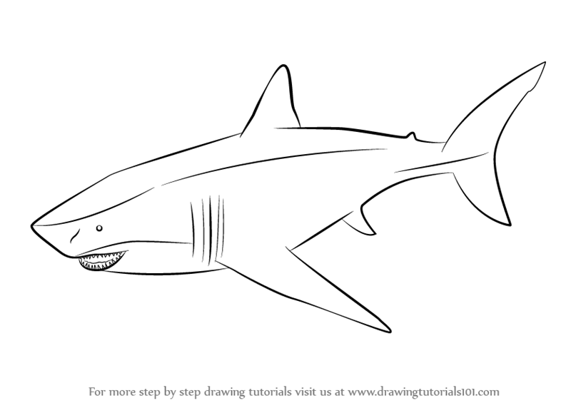 pictures how to draw a shark