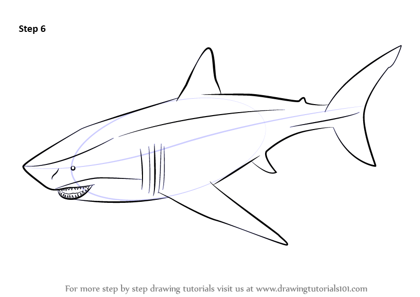 Learn How To Draw A Megalodon Fishes Step By Step