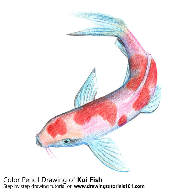 Colorful koi fish drawings images for What color are fish