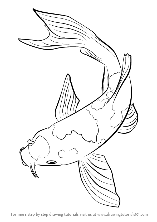 Learn how to draw a koi fish fishes step by step for Koi fish drawings