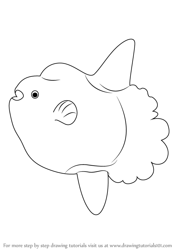Learn How to Draw a Ocean Sunfish