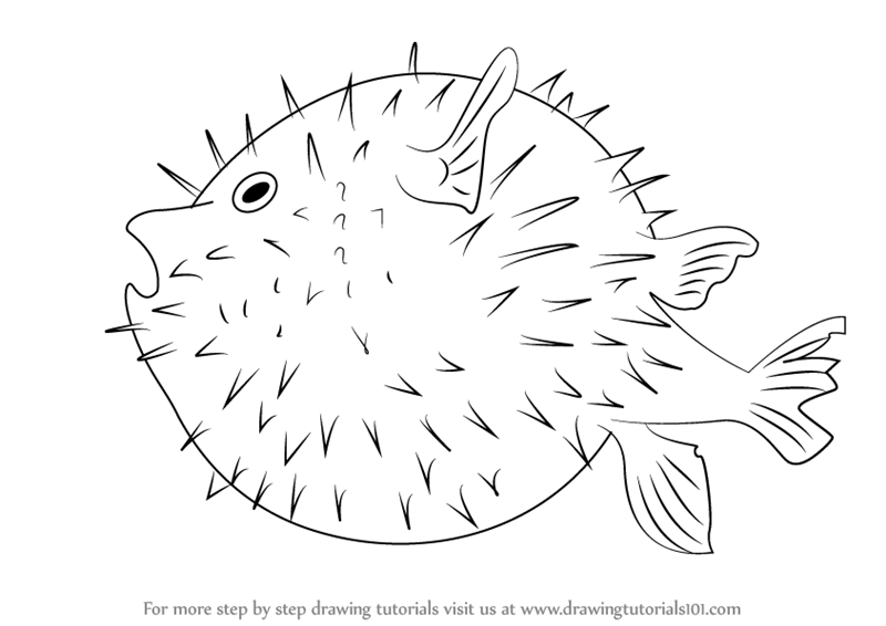 How to draw a puffer fish for kids - photo#16