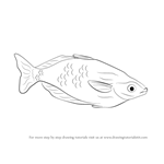 How to Draw a Rainbowfish