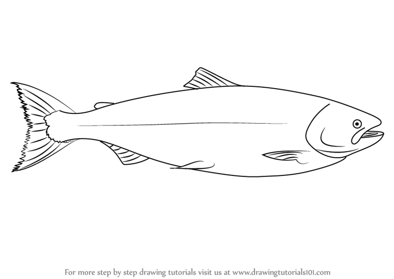 Learn how to draw a salmon fishes step by step drawing for Salmon coloring pages