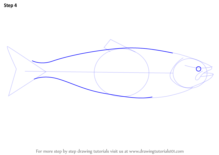Learn How To Draw A Salmon Fishes Step By Step Drawing Tutorials