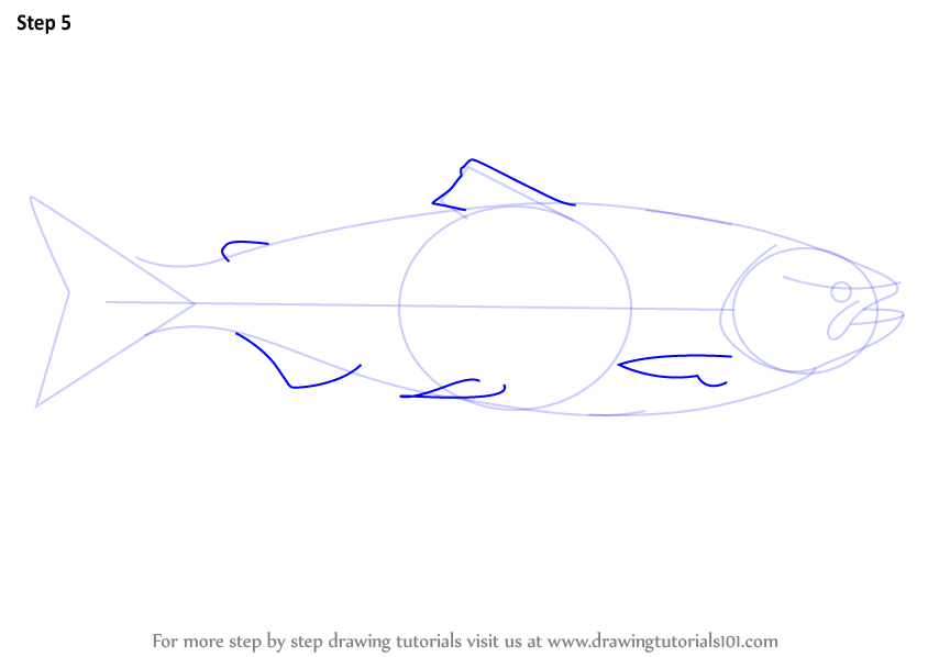Learn how to draw a salmon fishes step by step drawing for How to make doodle art