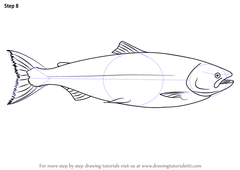 how to draw a redfish