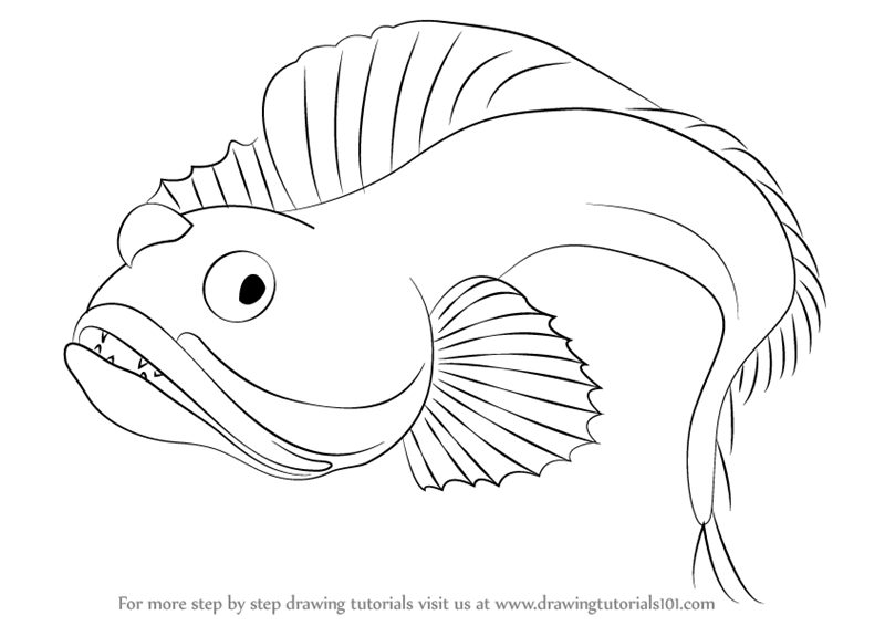 learn how to draw a sarcastic fringehead  fishes  step by