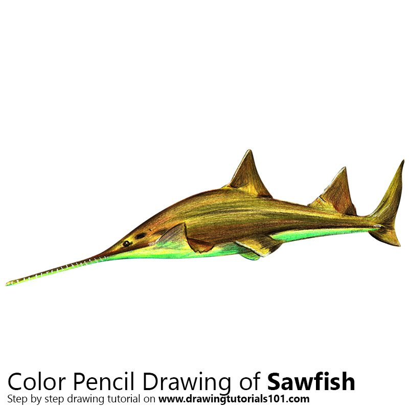 Sawfish Color Pencil Drawing