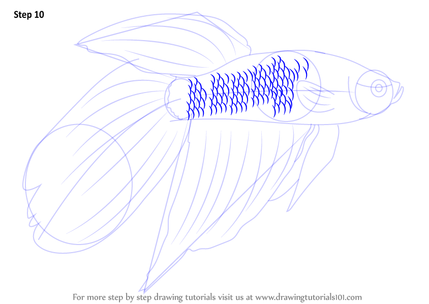 Learn How To Draw A Siamese Fighting Fish Fishes Step By