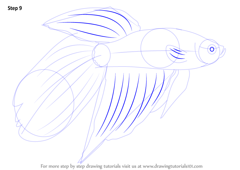 Learn How To Draw A Siamese Fighting Fish Fishes Step By Step