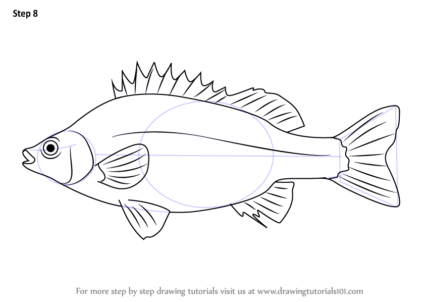 learn how to draw a silver perch  fishes  step by step   drawing tutorials