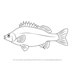 How to Draw a Silver Perch