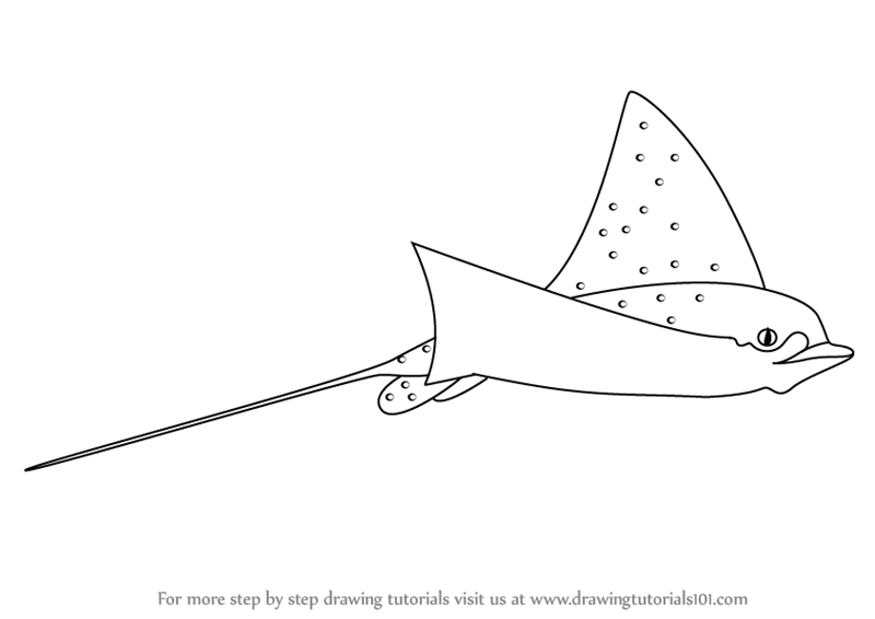 learn how to draw a spotted eagle ray  fishes  step by