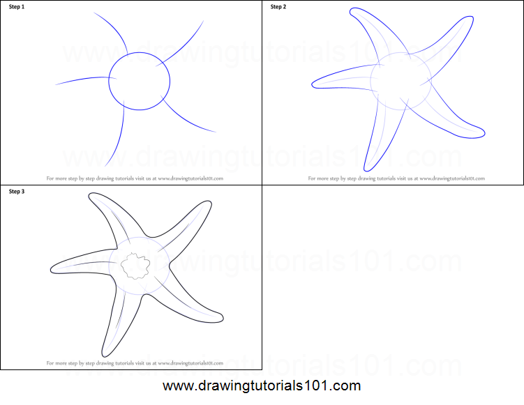 How to draw a starfish printable step by step drawing sheet drawingtutorials101 com