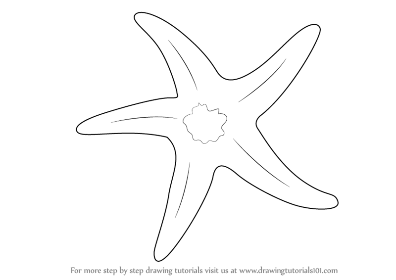 Learn how to draw a starfish fishes step by step drawing tutorials