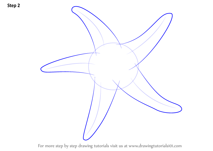 Learn How to Draw a Starfish (Fishes) Step by Step : Drawing Tutorials
