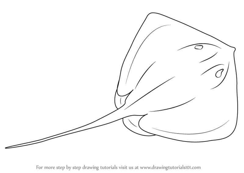 Learn how to draw a stingray fishes step by step drawing tutorials