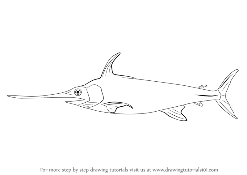 Learn how to draw a sword fish fishes step by step for How to draw fish