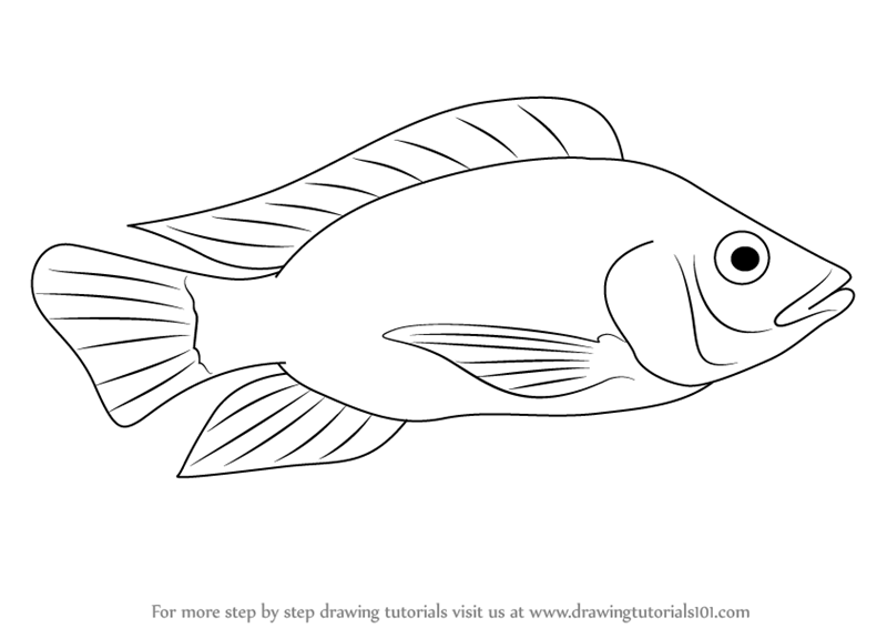 learn how to draw a tilapia  fishes  step by step