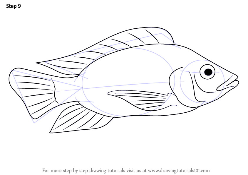 Learn How To Draw A Tilapia Fishes Step By Step Drawing Tutorials