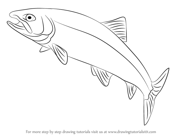 learn how to draw a trout (fishes) step by step drawing tutorialshow to draw a trout